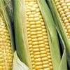 ITENE trabaja en nuevos embalajes realizados en maiz y almidon