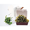 plantpack_envase