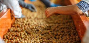 Nueva regulación en los embalajes de madera para los envíos a Canarias